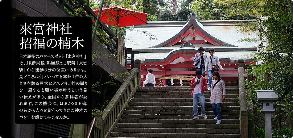 来宮神社 招福の楠木