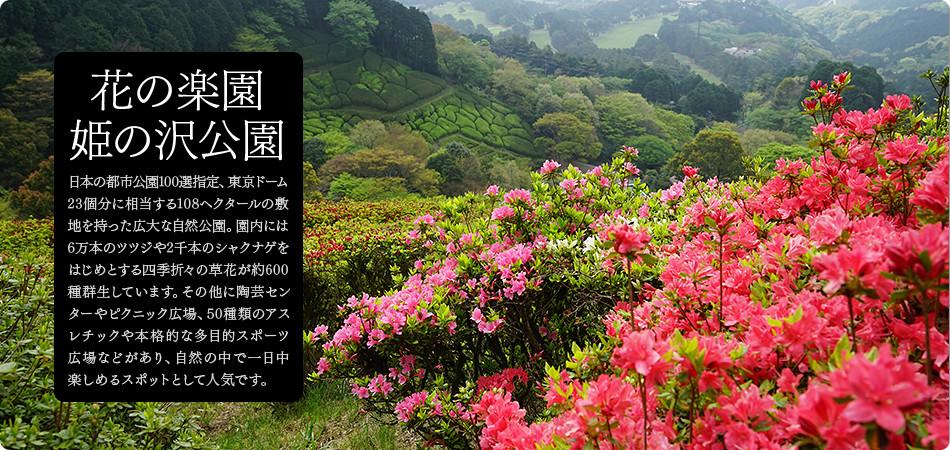 花の楽園 姫の沢公園